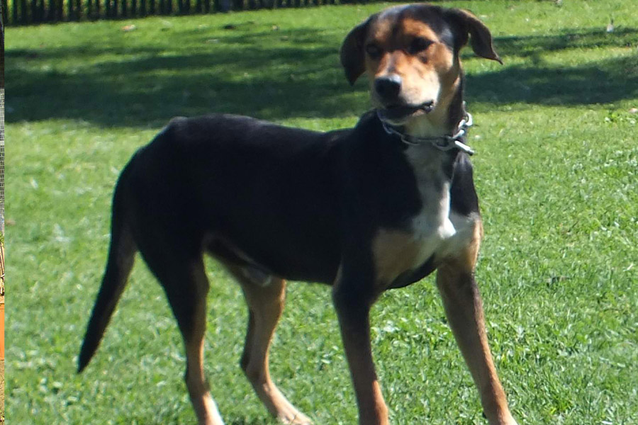WeCare Country Kennels - Dogs For Adoption - Butch