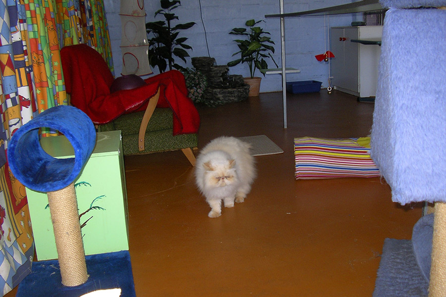 WeCare Country Kennels - Our Services - Cat Apartments