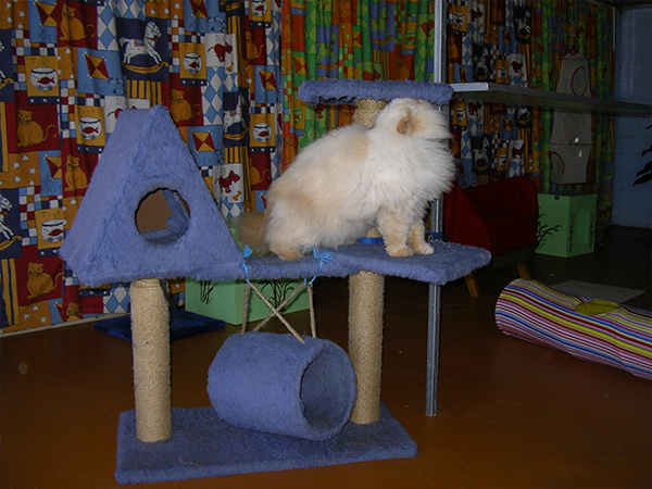 Image of Cat Apartments - WeCare Country Kennels