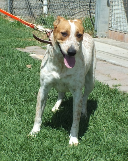 WeCare Country Kennels - Dogs For Adoption - MILLY