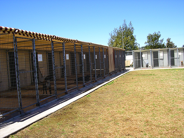 Image of Dog Kennels - WeCare Country Kennels