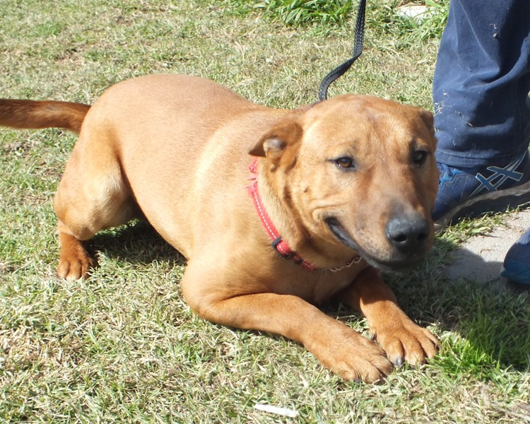 WeCare Country Kennels - Dogs For Adoption - 644 JAX