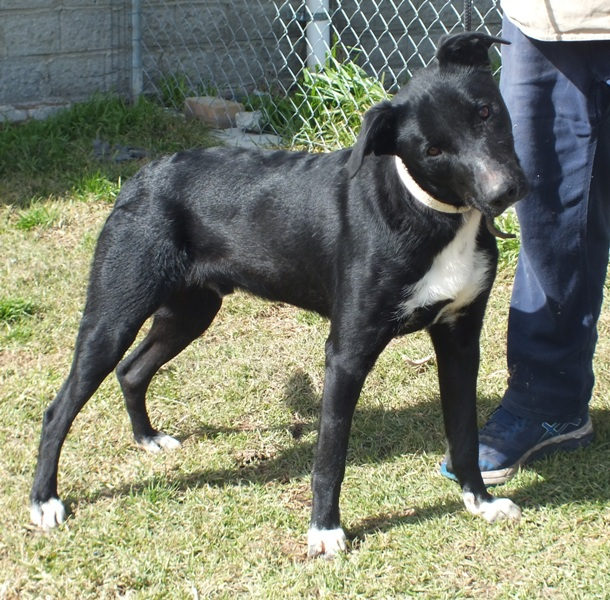 WeCare Country Kennels - Dogs For Adoption - 643 max